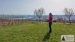 Rhein und Nierstein vom Wartturm aus