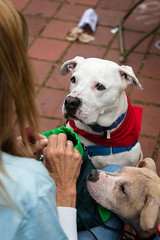 Bruno (Knight725) Tags: dog pennslanding d800 2470f28 adoptionevent
