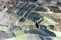 Welo Farming (David Abresparr) Tags: farming ethiopia wollo welo wolo etiopien jordbrukslandskap jordbruketiopien