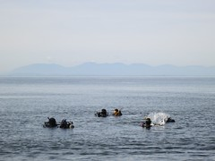 Divers at Whytecliff Park (Ruth and Dave) Tags: sea mountains water divers view horizon floating scuba surface vancouverisland hazy whytecliffpark westvancouver splashing