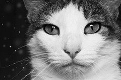#2 (Katie Stan) Tags: white black monochrome cat landscapes kitten feline bokeh surreal whiskers fantasy