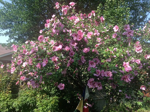 Wow check out Allison's bush!