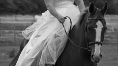 Bride on horseback (jacqui barry) Tags: wedding bw horse bride dress riding