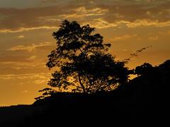 Em algum lugar, em alguma estrafda (Gabriela Scaranto) Tags: road sunset tree prdosol estrada rvore silhueta