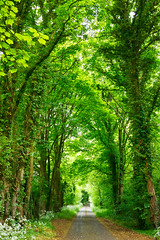 Forest road (Dmitri Naumov) Tags: road uk travel summer tree green nature leaves rural forest way outdoors alley woods day branch quiet britain hiking path empty country scenic greenwood tunnel nobody foliage fairy journey lane environment lush asphalt mystic pathway dense thicket nonurban