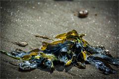 À marée montante.2 - #DH362 Post-traitement | Post-processing (Didier Hannot Photography) Tags: france poitoucharentes leboisplageenré ilobsterit