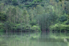 Rain Season :: Shing Moon Reservoir (), Hong Kong (bgfotologue) Tags: hk water landscape hongkong still stream soft nt running reservoir  kowloon   newterritories       tsuenwan   shingmoon