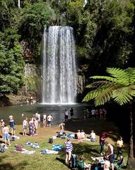 Millaa Millaa Falls (Seb Ian) Tags: fern tree water swim waterfall scenery candid scenic australia tourists waterfalls queensland swimmer outback swimmers millaamillaa