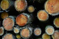logged (Mxziton) Tags: wood forest log dean logs