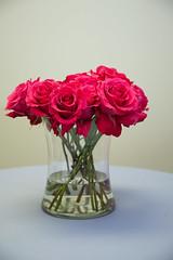 Floral Inventory - Rose (Garden - Dark Pink) (FestivitiesMN) Tags: pink flowers roses flower floral rose redrose bunch florals festivities fushia gardenroses gardenrose outsidephotographer phodot festivitiesmn redgardenrose