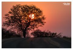 Dusk at Kruger (V I J U) Tags: africa road sunset sun tree forest landscape southafrica dusk krugerpark canon7d
