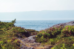 Southport View (technicolor dreams) Tags: ocean sea water grass canon newfoundland pretty bokeh path horizon t3 60mm southport 1100d