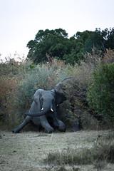 (funnyface_6) Tags: kenya masaimara africatrip2013