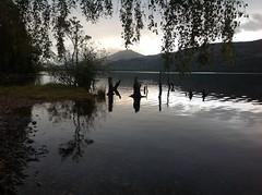 Scotland 2013 (cardally) Tags: reflection scotland perthshire lochrannoch 2013