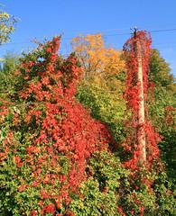 Autumn Nature Fights Electricity, Nocrop (johan.pipet) Tags: blue autumn trees red green fall nature colors canon devin europe industrial pole electricity slovensko slovakia tamron palo priroda bratislava bartos jesen devín farby 2013 bartoš