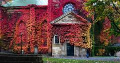 Klara kyrka, Stockholm, October 10, 2013 (Ulf Bodin) Tags: church cemetery sweden stockholm sverige klara klarakyrka kyrka parthenocissus vildvin stockholmslän canonef50mmf12lusm canoneos5dmarkiii