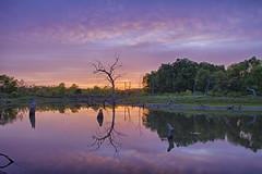 Lavender (Kansas Poetry (Patrick)) Tags: kansas lawrencekansas clintonlake patrickemerson patricknancydosoccer