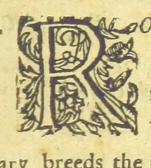Image taken from page 11 of '[The Spanish Gipsie. [A comedy, in five acts and in prose and verse.] ... Written by T. Middleton and W. Rowley, etc.]' (The British Library) Tags: vines small initial publicdomain letterr page11 vol0 bldigital mechanicalcurator pubplacelondon date1661 middletonthomasdramatist sysnum002486456 imagesfrombook002486456 imagesfromvolume0024864560