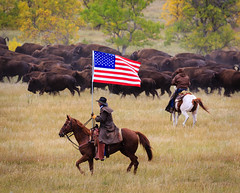 IMG_2822-3.jpg (kendra kpk) Tags: horse snow rain fog southdakota blackhills spearfishcanyon cowboy september bison custerstatepark custer americanbison spearfish 2013 buffaloroundup dakotawindsphotography blackhillsphotoshootout kendraperrykoski