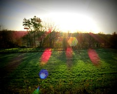 Lomo sun (togwood) Tags: morning trees sun grass lensflare lomoish wigan worthingtonlakes