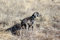 """BRW Field Day - Benelli • <a style=""""font-size:0.8em;"""" href=""""http://www.flickr.com/photos/66999112@N00/11201355174/"""" target=""""_blank"""">View on Flickr</a>"""
