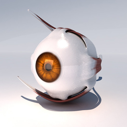 anatomy_eye_model