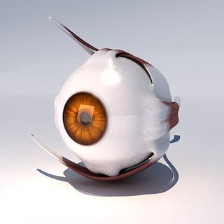 anatomy_eye_model