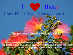 I love Flickr (Batikart) Tags: flowers plants love nature flickr day no protest iloveflickr ursula boycott sander 2014 nein 100faves batikart iloveflickrday 05012014 january52014 20140105