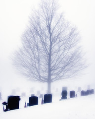 Foggy Morn (Tewmom) Tags: tree cemetery fog headstone daily 365 dailyphoto project365 365project dailyshoot 3652014
