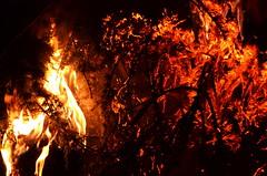 Fir On Fire [Pagnacco - 6 January 2014] (Doc. Ing.) Tags: italy fire fireworks bynight fvg ud befana friuli twelfthnight udine vecchia 2014 12thnight friuliveneziagiulia nordest pignarul pagnacco