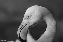Hey.. (sonalkhunt) Tags: india animal photography zoo blackwhite eyes pelican sonal khunt sonalkhunt