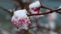 es wird Winter... / it shall winter ... (Harald Steeg) Tags: bestofblinkwinners blinksuperstars