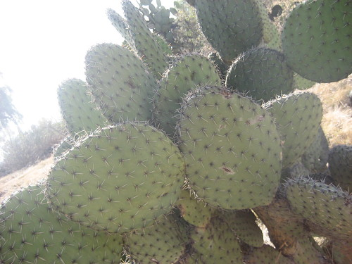 mexiko_city 060