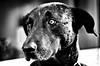 Mola (tolltroll11) Tags: hunde bardino