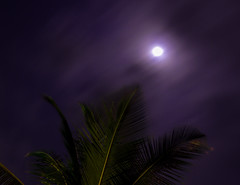 Can I touch the Moon? (Maganjoh) Tags: longexposure trees moon nature weather night clouds stars nikon palmtrees geo nikoncoolpix fastmovingclouds nikonp510 coolpixp510