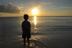 DSC_0690-001 (jrnehring4183) Tags: ocean family sunset vacation tree beach pool swimming swim sunrise fun islands sand nikon relaxing carribean grand palm bikini iguana tropical cayman tanning sunbathing d5000