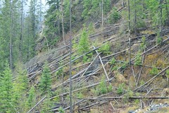 Trip to BC (Vegan Butterfly) Tags: road trip trees mountain canada slide fallen landslide land