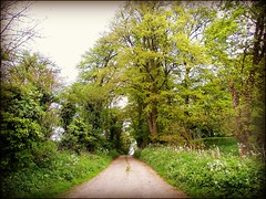 Country Lane . (** Janets Photos **) Tags: uk trees grass countryside rustic lanes paull eastyorkshire sonice
