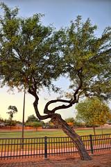 Tempe, Arizona (Anas O. Alghamdi) Tags: camera arizona sky usa tree love me nature beautiful station photoshop canon happy us nikon university view desert state like police az asu capture tempe picoftheday sunsit            nikond5300