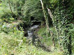 Meerbeek stream (Joop van Meer) Tags: 2015 dworp gr12 meerbeek