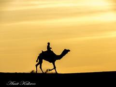 Khuri Sand Dunes- Jaisalmer (AmitKakroo) Tags: desert camel jaisalmer rajasthan