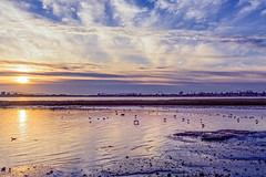 Golden Sunset on the Bay (luqmac) Tags: nikond7100 landscapesscenic martinlutherkingjrregionalshoreline oaklandcalifornia cityofoakland 66thave edgewaterdrive eastbayregionalparkdistrict eastoakland edgewaterseasonalwetland oakland california usa sanleandrobay