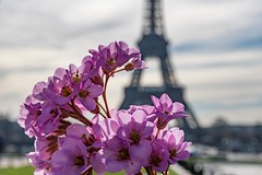 Spring at .... (julialarrigue) Tags: paris spring eiffeltower eiffel