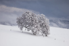 weather change (crazyhorse_mk) Tags: windbeech schauinsland stohren giesshuebel blackforest schwarzwald tree snow wind weatherchange winter sky clouds fog cold baden germany mountain forest