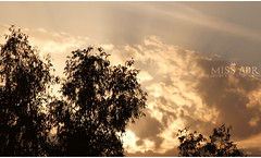 Golden sky (miss.abr) Tags: sky natural photography photo canon d550 tree clouds sunset تصويري تصوير كانون