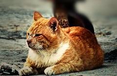 cat تصوير بواسطة كاميرا سوني الفا a57 عدسة 55 او 300  Photography by Sony Alpha a57 camera lens 55 or 300 (Instagram x3abr twitter x3abrr) Tags: camera cats by cat lens photography or sony 300 alpha 55 a57 تصوير او عدسة كاميرا بواسطة سوني الفا