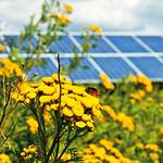 Photovoltaikanlage mit Blumen