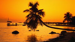 CB017870 (manhhung) Tags: ocean trees sunset plants usa beach water silhouette yellow outdoors evening coast pier florida nobody palmtree northamerica backlit idyllic atlanticocean naturalworld marinescenes floridakeys southernunitedstates monroecounty northatlanticocean northamericanatlanticcoast southeastamericancoast