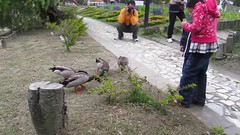 Ethan's pelting the ducks with food (Stinkee Beek) Tags: erin taiwan ethan taichung nantou swissgarden