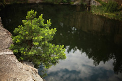 Needles (yanchenkov) Tags: travel camp lake green nature water pine forest canon 50mm mirror rocks 5d needles quarry